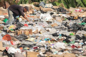 Venezolanos pelean con buitres por restos de comida en un basurero