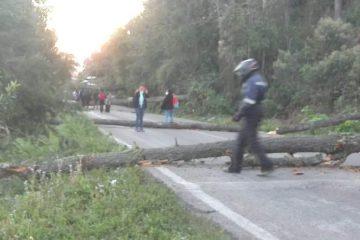 Derriban árboles para bloquear carretera en Oxchuc