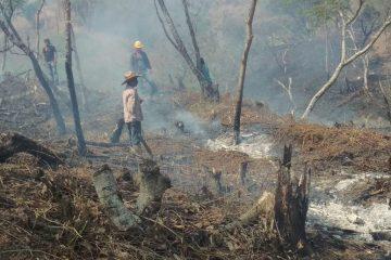 Detiene FGE a implicados en ecocidio en La Concordia: Llaven Abarca