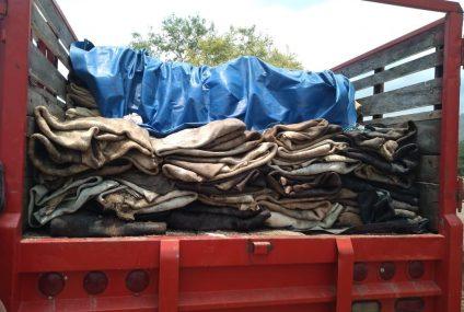Asegura Fiscalía 150 pieles de bovino en la Costa de Chiapas