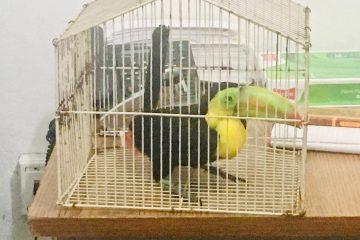 Asegura FGE ave en peligro de extinción en la Región Selva