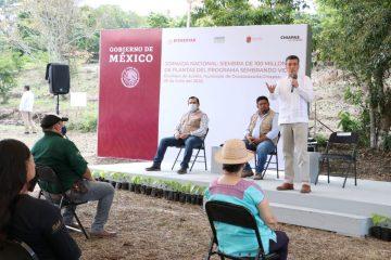Destaca Rutilio Escandón beneficios del programa Sembrando Vida para Chiapas