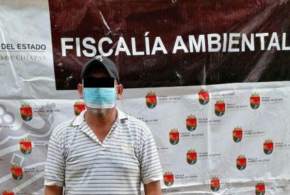 Detenido por transportar madera de forma ilegal en Chiapas