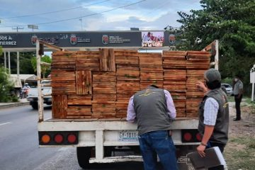 Detienen a 7 por ecocidio en Chiapas