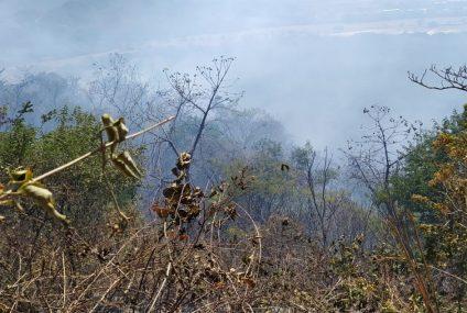 En Chiapas, registra Cecif cuatro incendios forestales en lo que va de 2021