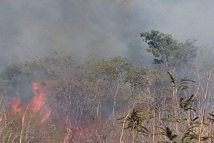 Reportan incendio en Cañón del Sumidero; se queman 10 hectáreas