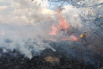 Se ubica Chiapas como el cuarto estado con más superficie afectada por incendios