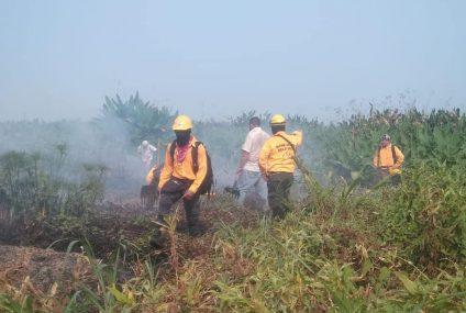Incendios han quemado más de 200 hectáreas en La Sepultura