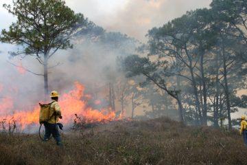 Se han registrado 43 incendios forestales en la entidad: Cecif