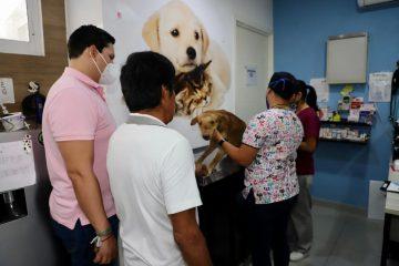Lanzan reto para cuidado de perros en situación de calle